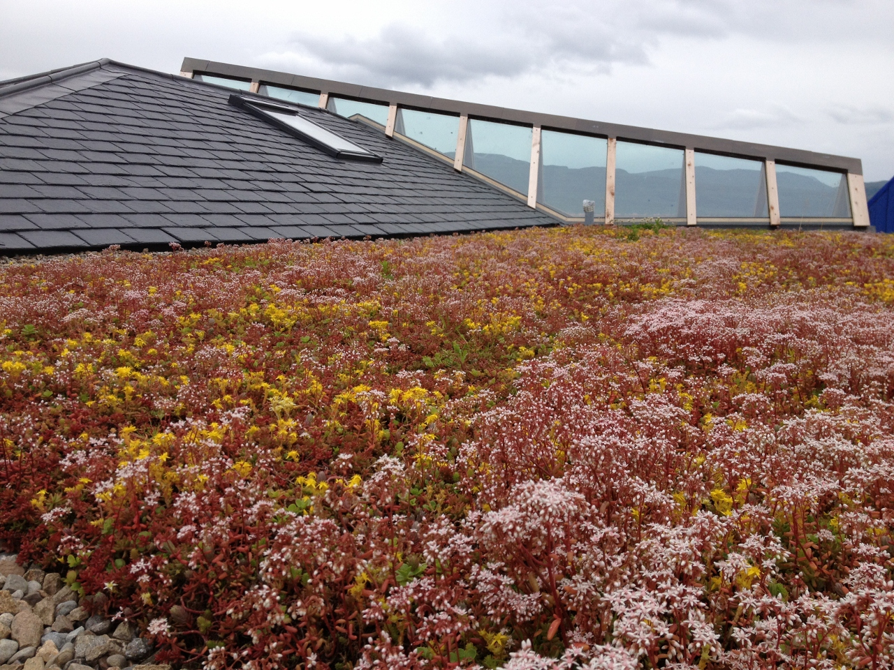 Rubberseal Green Roof Modules